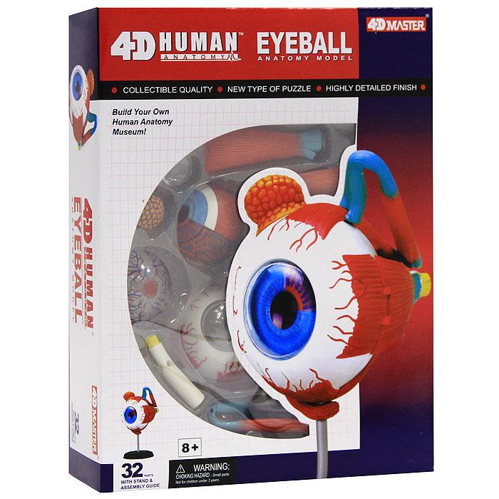 """Анатомическая модель """"Глаз человека"""