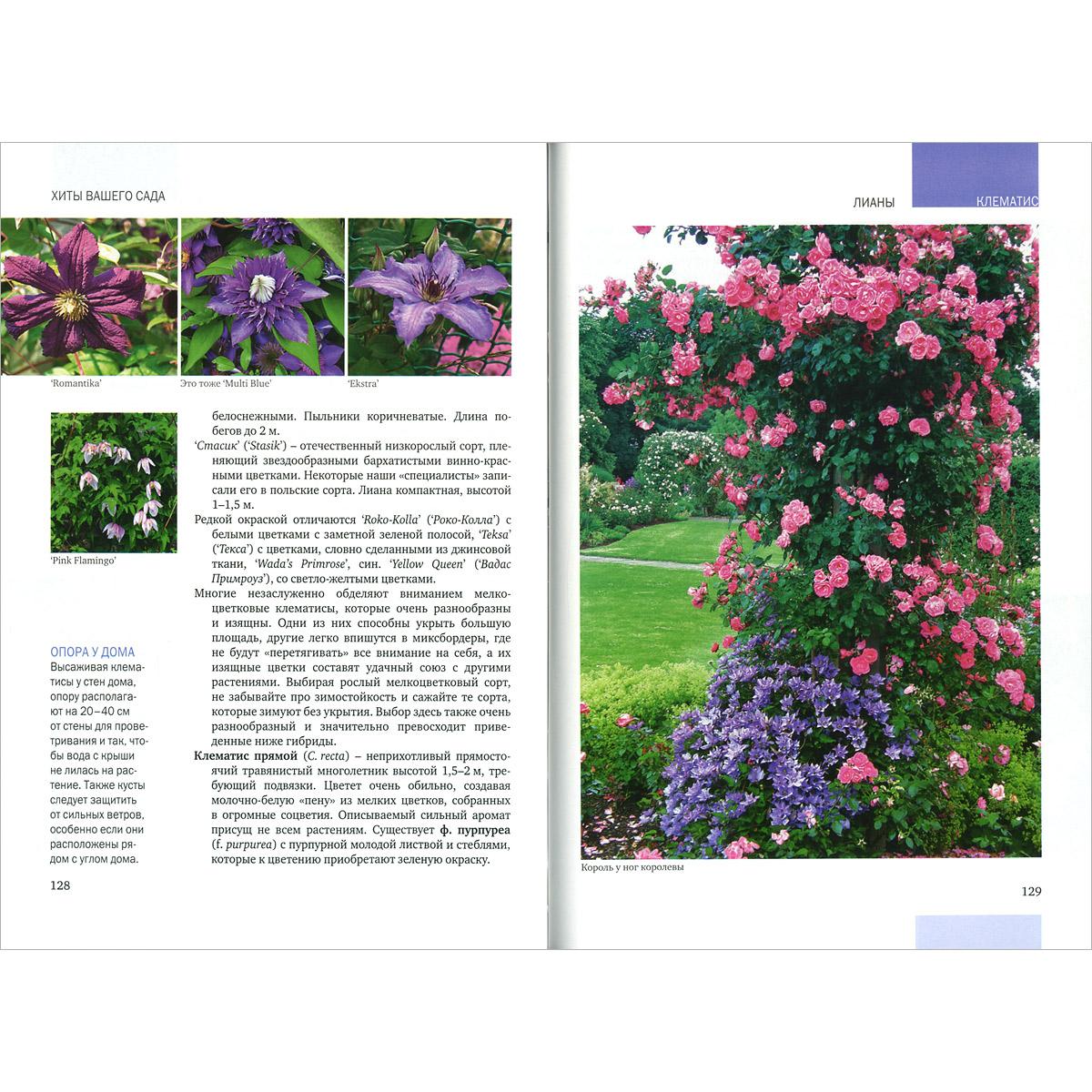 Каталог садовых цветов и ценой