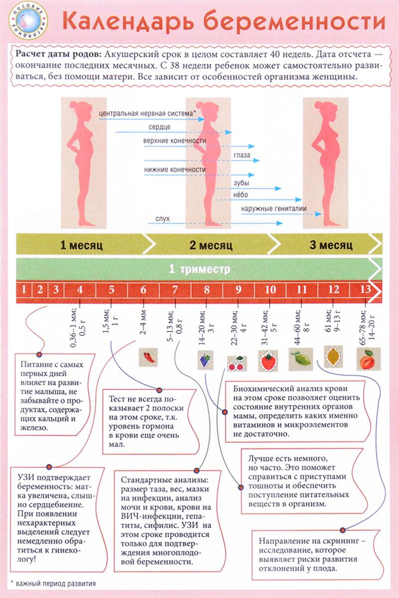Как правильно посчитать срок беременности по месячным