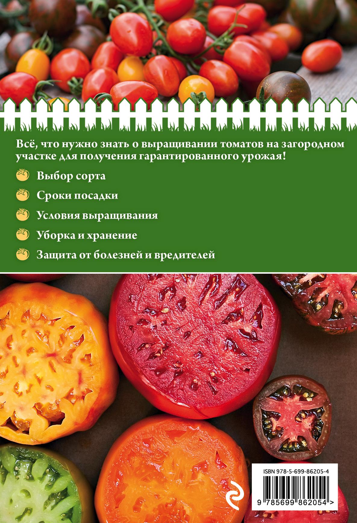 От рассады до урожая томаты 683