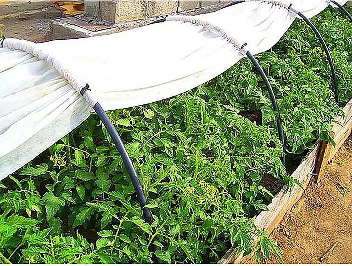 Условия для выращивания перца в открытом грунте 9