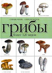 Грибы. Справочник-определитель. Более 120 видов. Наталья Макарова