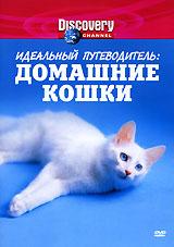 Discovery: Идеальный путеводитель: Домашние кошки жаровня scovo сд 013 discovery