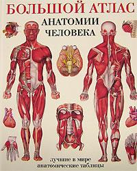 Махиянова Е.Б. Большой атлас анатомии человека винсент перез большой атлас анатомии человека