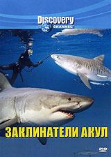 Discovery: Заклинатели акул маккей х как плавать среди акул