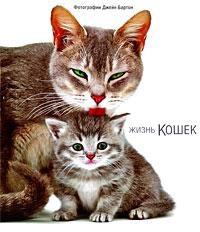 Джейн Бартон Жизнь кошек от котенка до кошки