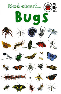 Mad about... Bugs it s all about scary spiders