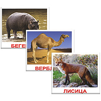 Вундеркинд с пеленок Обучающие карточки Дикие животные ВСПБК вундеркинд с пеленок домана цвета