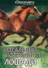 Discovery: Идеальный путеводитель: Лошади