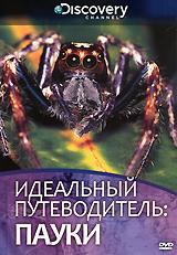 Discovery: Идеальный путеводитель: Пауки жаровня scovo сд 013 discovery