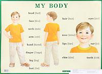 Строение тела человека/ My Body. Плакат art gallery плакат раскраска english по английскому языку с наклейками my room моя комната