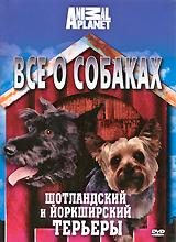На нашей планете существует около 400 различных пород собак. Про самые популярные из них вы узнаете из цикла программ