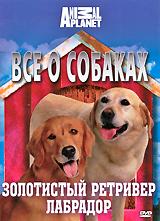 Все о собаках: Золотистый ретривер, лабрадор все о собаках золотистый ретривер лабрадор
