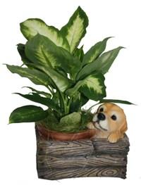 Кашпо декоративное Щенок. НА08116HA08116Кашпо для цветов представляет собой декоративную вазу, выполненную в виде деревянного ящика и сидящего в нем щенка. Ваза предназначена для установки внутрь цветочных горшков с растениями. Кашпо, выполненные из полистоуна, обладают долговечностью и износостойкостью. Эти изделия не потеряют яркости красок и четкости форм даже после длительной эксплуатации. Кашпо часто становятся последним штрихом, который совершенно изменяет интерьер помещения или ландшафтный дизайн сада. Благодаря такому кашпо вы сможете украсить вашу комнату, офис, сад и другие места.Характеристики:Материал: полистоун. Размер отверстия для горшка: 14 см х 14 см. Общий размер кашпо: 18,5 см х 21 см х 15 см. Размер упаковки: 22,5 см х 17,5 см х 18 см. Артикул:HA08116. Производитель:Китай. Внимание!Уважаемые клиенты, обращаем ваше внимание на тот факт, что кашпо поставляется без цветов.