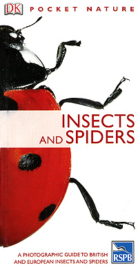 Insects and Spiders it s all about scary spiders
