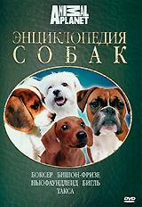 Какая порода собак общепризнанно во всем мире считается лучшим спасателем? Какую собачку раньше носили на шее, как ожерелье? В честь какой породы назвали