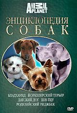 Энциклопедия собак: Бладхаунд, йоркширский терьер, датский дог, ши-, родезийский риджбек