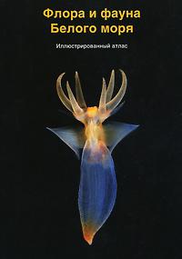 Флора и фауна Белого моря. Иллюстрированный атлас зенкевич л а моря ссср их фауна и флора