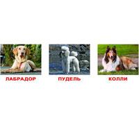 Вундеркинд с пеленок Обучающие карточки Породы собак раннее развитие вундеркинд с пелёнок обучающие карточки породы собак 20 шт