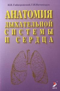 Анатомия дыхательной системы и сердца