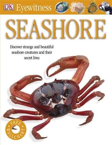 Фото Seashore dk eyewitness top 10 travel guide scotland