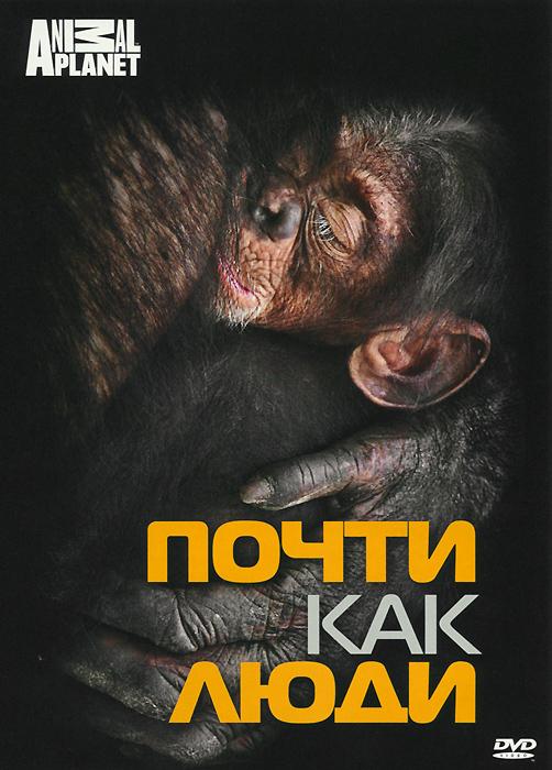 На протяжении четверти века Джейн Гудолл изучала шимпанзе в Национальном парке Гомбе в Танзании. У нее накопилась масса интересных фактов и историй про жизнь и поведение этих животных. Джейн расскажет нам, насколько похожи человек и шимпанзе. Зта программа - удивительное путешествие в мир огромных обезьян.
