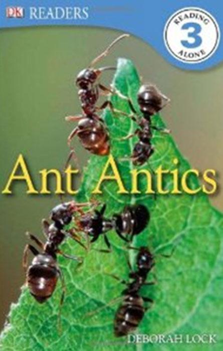 Ant Antics ant antics