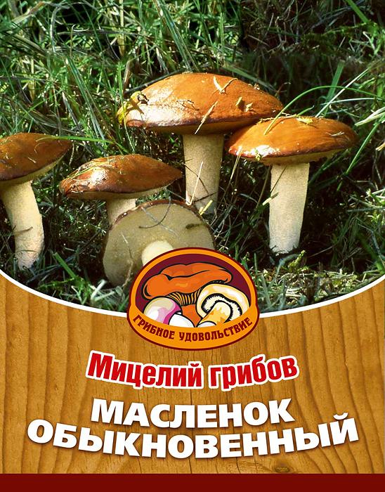 Мицелий грибов Масленок обыкновенный, субстрат. Объем 60 мл мицелий грибов белый гриб субстрат объем 60 мл