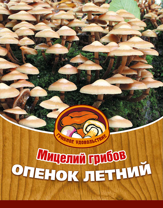 Мицелий грибов Опенок летний, 16 древесных палочек10008Опенок летний - вкусный, деликатесный гриб, обладает сильным ароматом и нежной мякотью. Его можно использовать для приготовления первых и вторых блюд, сушки, маринования и соления. Благодаря мицелию грибов Опенок летний теперь вы без труда сможете вырастить любимые грибы у себя в саду или дома. И уже через 3-5 месяцев после посадки у вас появится первый урожай грибов. За один год можно собрать от 3 до 6 кг с каждого бревна. Для того чтобы вырастить грибы вам понадобится: мицелий Грибное удовольствие, бревно или палка лиственных пород (бук, граб, ольха, осина, ясень, клен, береза, тополь, ива, каштан, дуб), дрель. Благоприятное время для посадки мицелия Опенок летний - в природных условиях с апреля по октябрь, в помещении - круглый год.Плодоносят мицелии в среднем от 3 до 5 лет, в зависимости от сорта грибов. Характеристики:Материал:древесная палочка. Размер упаковки:11 см х 15,5 см. Артикул:10008.