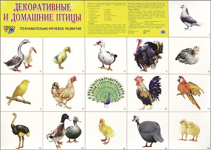 Домашние и декоративные птицы. Плакат domestic birds домашние птицы плакат isbn 978 5 4315 0955 1