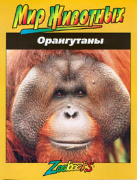 Автор не указан Орангутаны