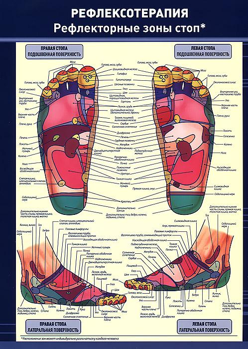 Рефлексотерапия. Рефлекторные зоны стоп. Плакат