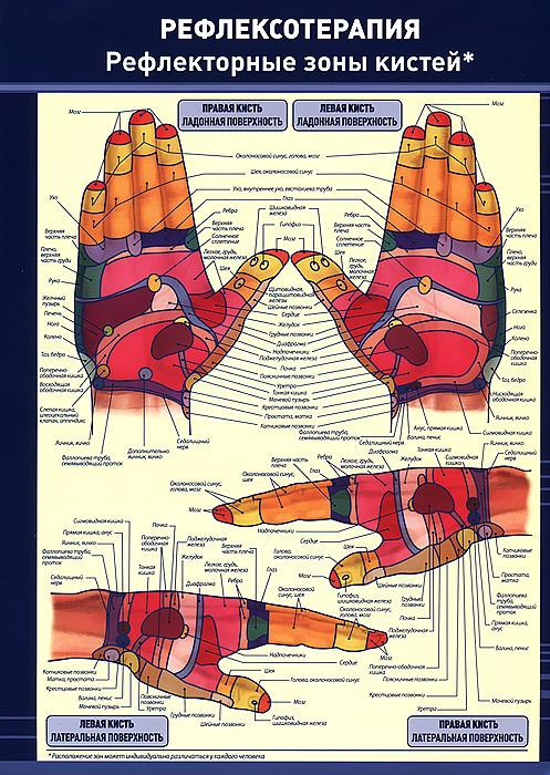 Рефлексотерапия. Рефлекторные зоны кистей. Плакат