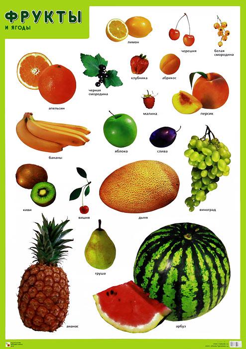 Фрукты и ягоды. Плакат футболка print bar фрукты и ягоды