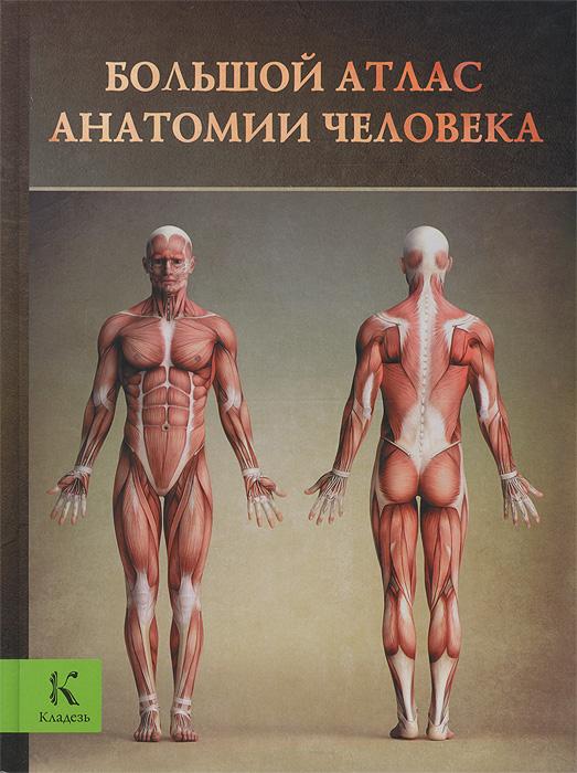 Винс Перез Большой атлас анатомии человека