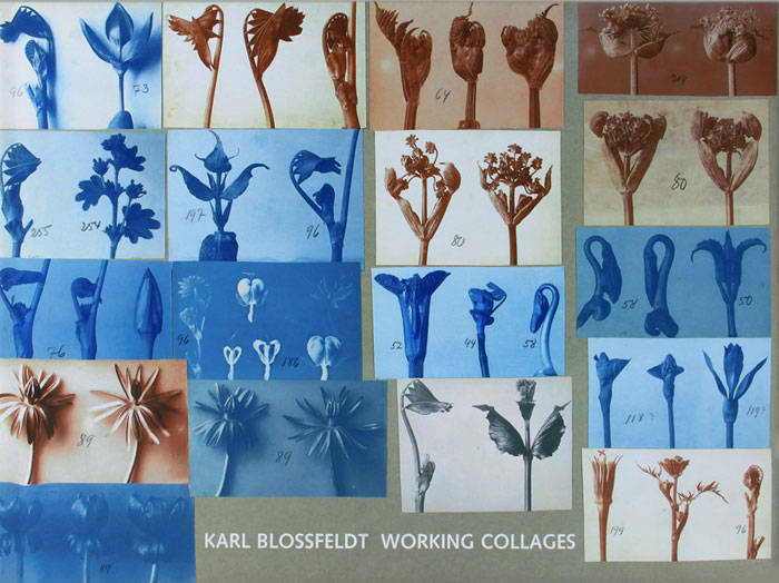 Karl Blossfeldt: Working Collages duncan bruce the dream cafe lessons in the art of radical innovation