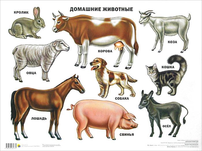 Домашние животные. Плакат