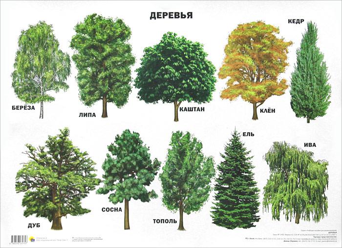 Деревья. Плакат