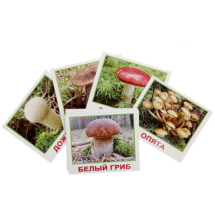 Вундеркинд с пеленок Обучающие карточки Мини-грибы набор обучающих карточек мини 40 numbers числа вундеркинд с пеленок