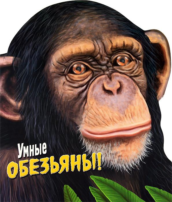 Дикие животные. Умные обезьяны! вайц к мир юных