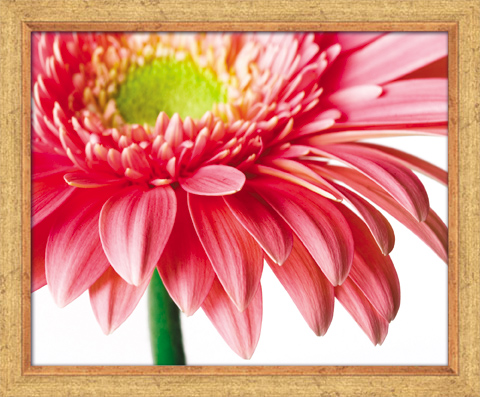 Постер в раме Цветок, 40 x 50 см постер в раме абстракция 60х60 см