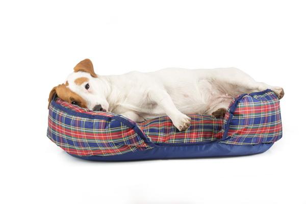 Лежак для собак Titbit, ортопедический, с наполнителем из лузги гречихи, 70 см х 45 см х 20 см