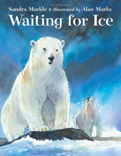 Waiting for Ice the cub