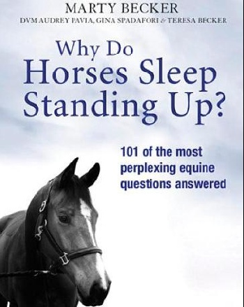 Why Do Horses Sleep Standing Up? horses