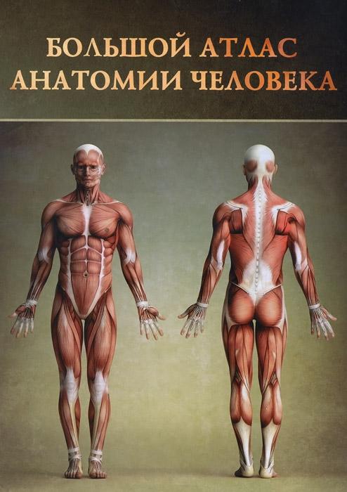 Винсент Перез Большой атлас анатомии человека спектор анна артуровна большой иллюстрированный атлас анатомии человека