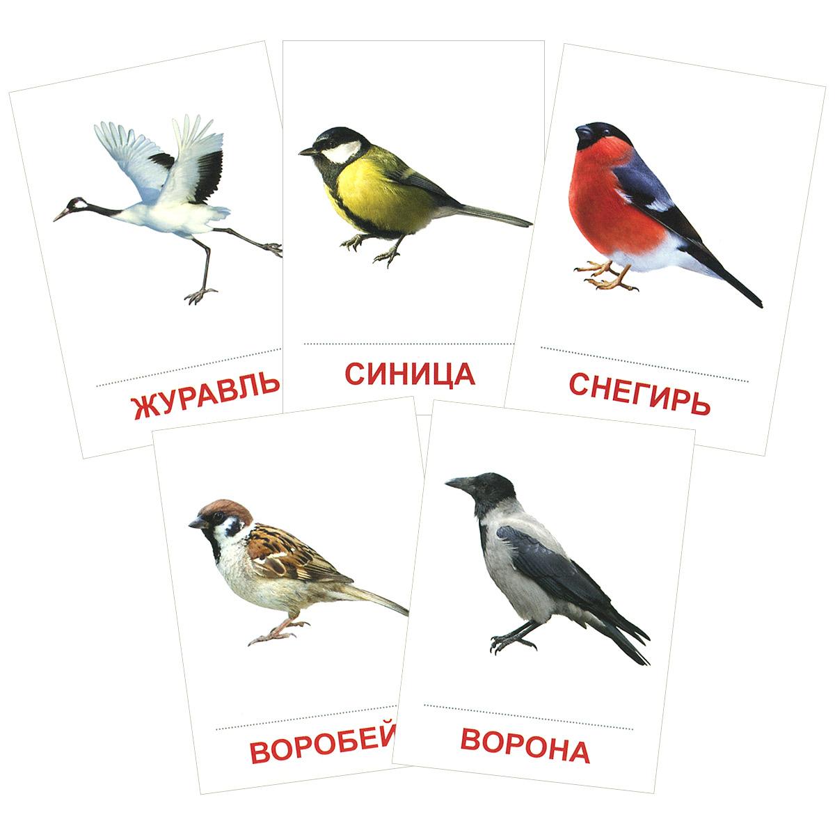 Птицы России (набор из 16 карточек)