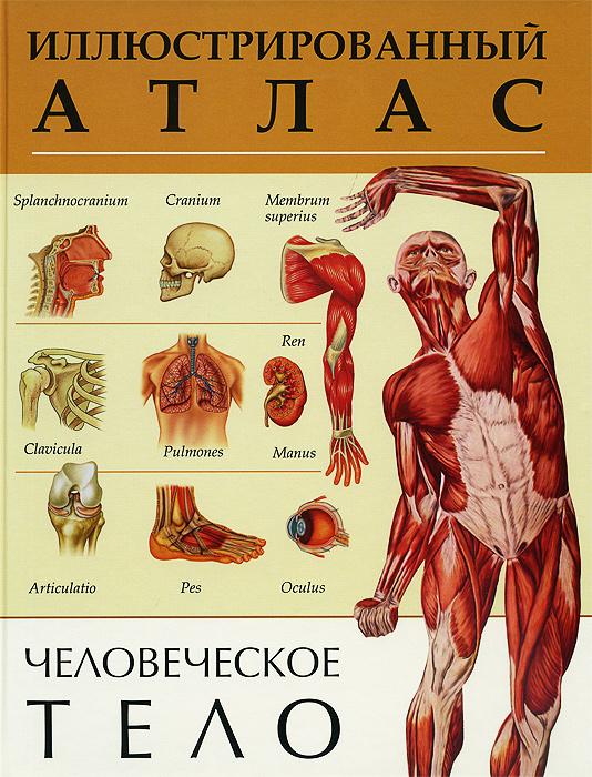Человеческое тело. Иллюстрированный атлас большой иллюстрированный атлас анатомии человека