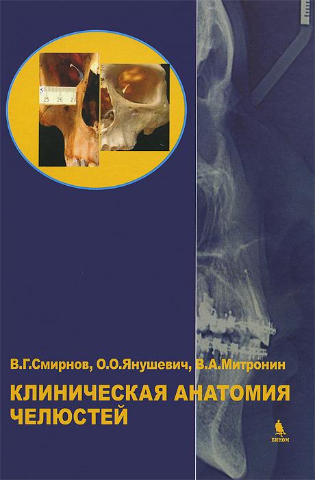 Клиническая анатомия челюстей