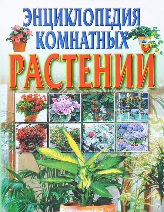 Светлана Быховец Энциклопедия комнатных растений наборы для выращивания растений вырасти дерево набор для выращивания ель канадская голубая