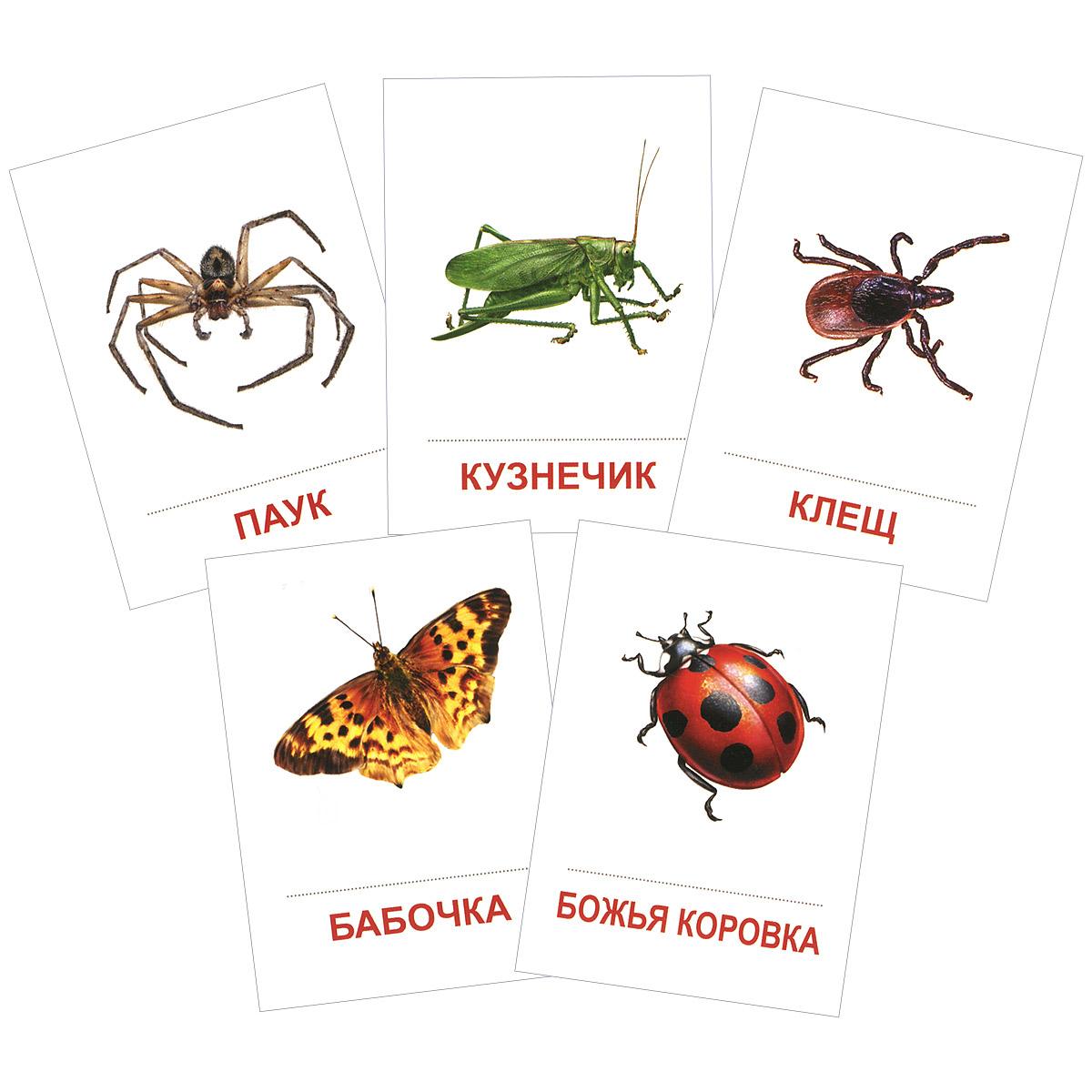 Насекомые (набор из 16 карточек)